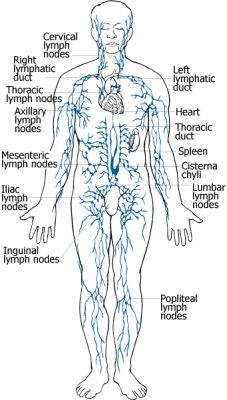 Image result for manual lymphatic drainage