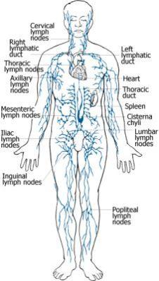 lymphatic-drainage